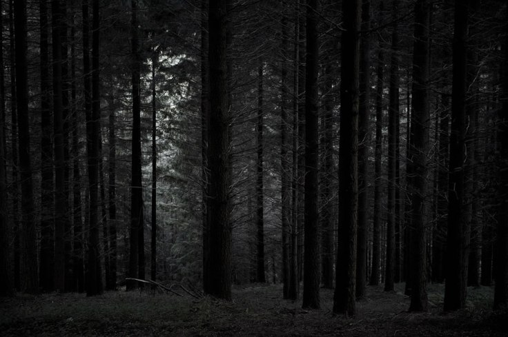 Spooky-I-love-my-forests-dark-cant-you-tell