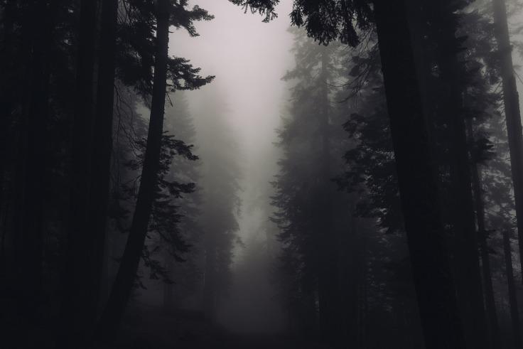 trees-2616706_1280